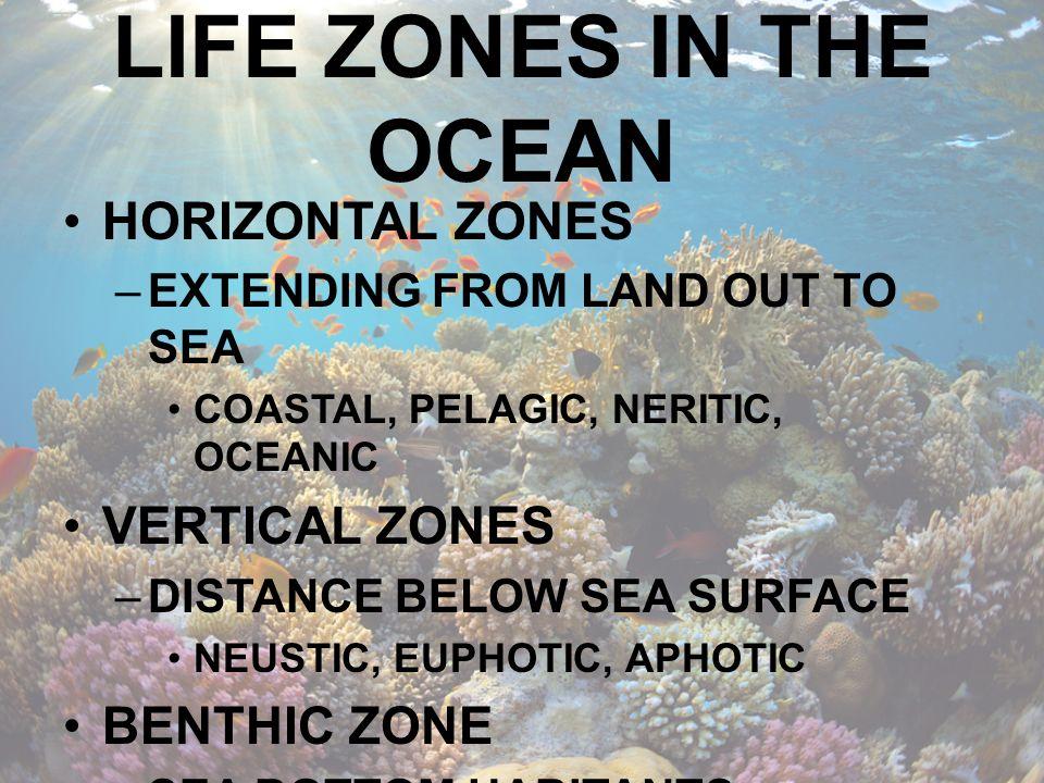 MIDNIGHT ZONES NO SUNLIGHT 1000M TO BOTTOM (AROUND 11,000M LOWEST) LOW DENSITY AND DIVERSITY OF LIFE 1000M – 4000M : BATHYPELAGIC ZONE 4000M – 6000M : ABYSSOPELAGIC ZONE 6000M – 11000M : HADOPELAGIC ZONE