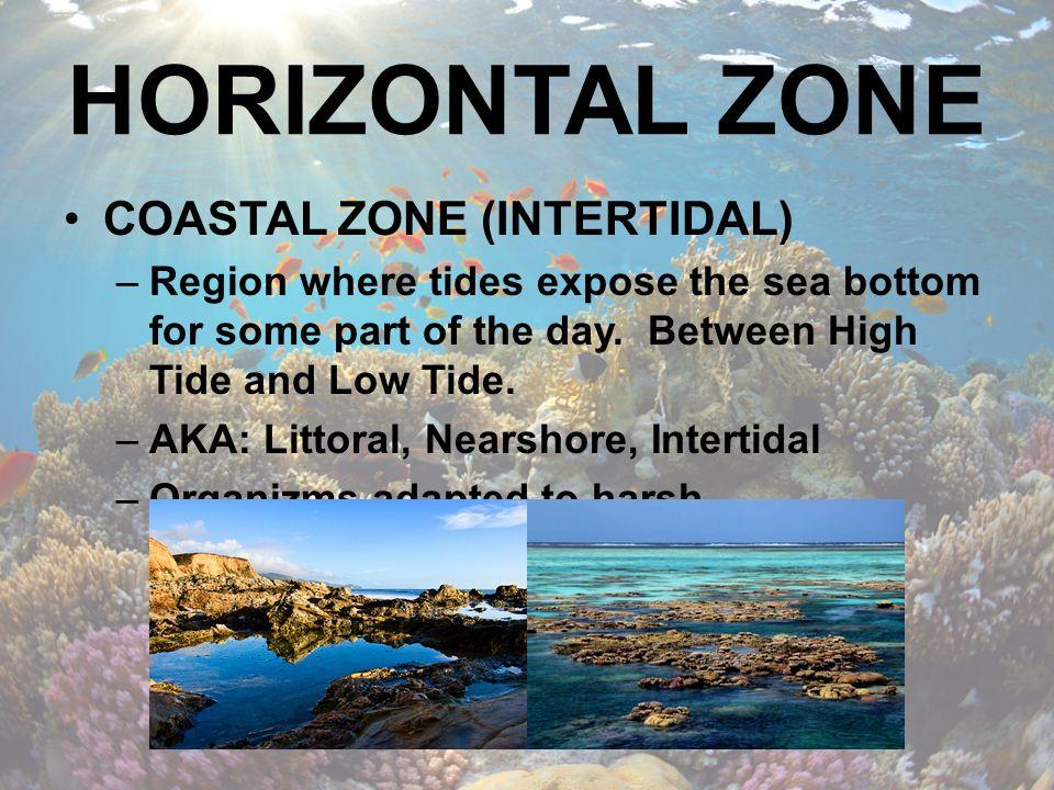 PELAGIC ZONE LOCATED SEAWARD OF THE COSTAL ZONE'S LOW-TIDE MARK.