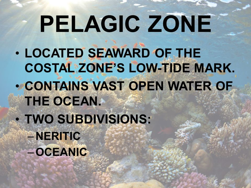 PELAGIC ZONE NERITIC ZONE –WATER OUTLYING THE CONTINENTAL SHELF –USUALLY EXTEND TO A DEPTH OF 600FT –SUNLIGHT PENETRATES ENTIRE COLUMN –GREATEST DENSITY AND DIVERSITY OF LIFE