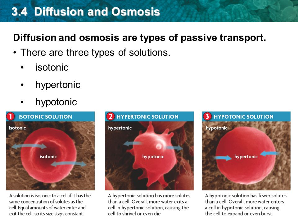 what type of transport is osmosis
