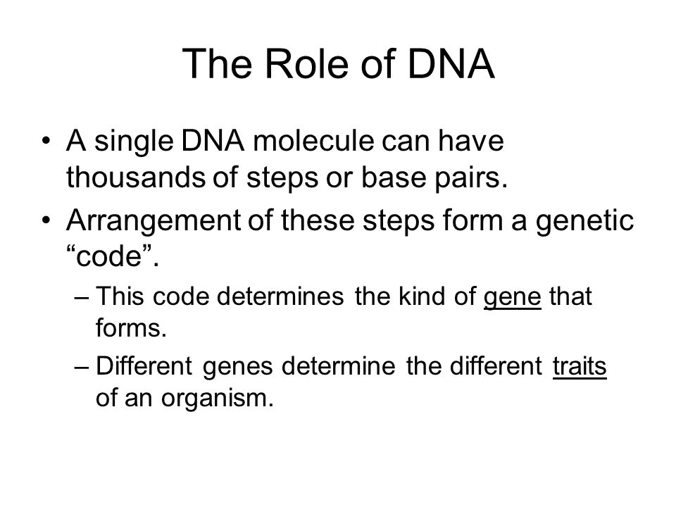 The Role of DNA A single DNA molecule can have thousands of steps or base pairs.