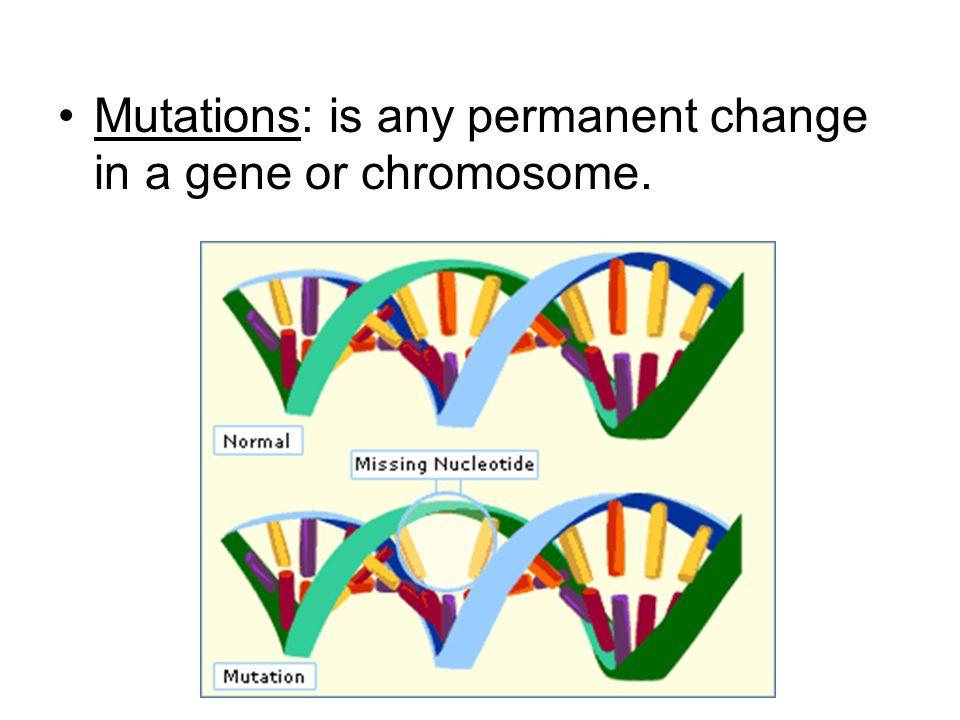 Mutations: is any permanent change in a gene or chromosome.