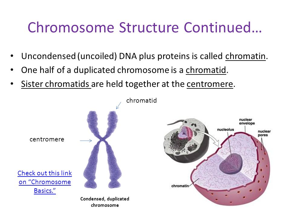 sperm chromatin structure essay What does a sperm chromatin structure assay test measure the scsa test measures dna fragmentation in the sperm the higher degree of fragmentation in a.
