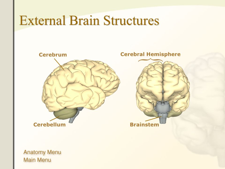 The Human Brain Anatomy Functions And Injury External Brain