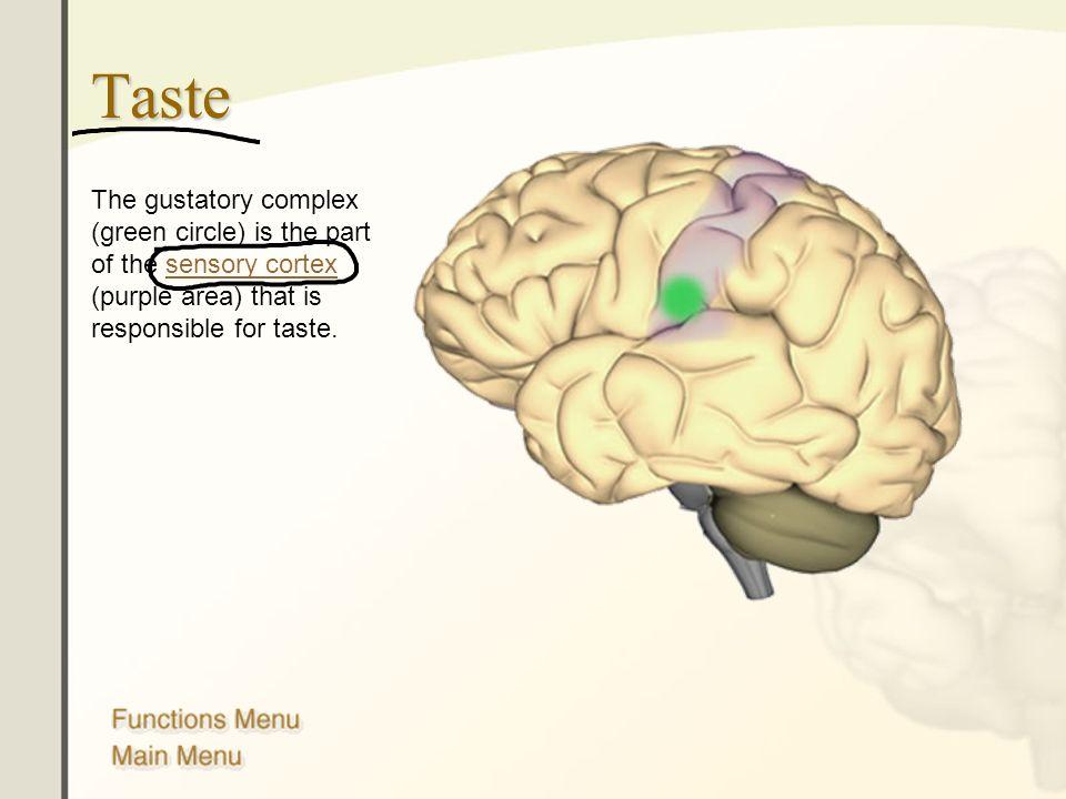 Erfreut Human Brain Anatomy Ppt Ideen - Menschliche Anatomie Bilder ...