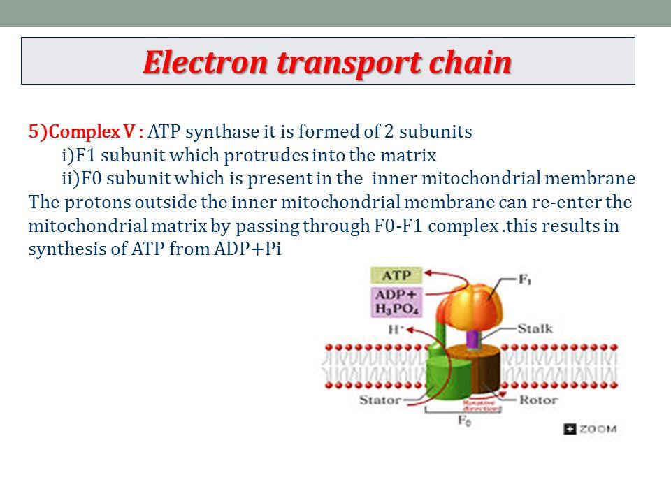 Mitochondrial Matrix Atp Synthase
