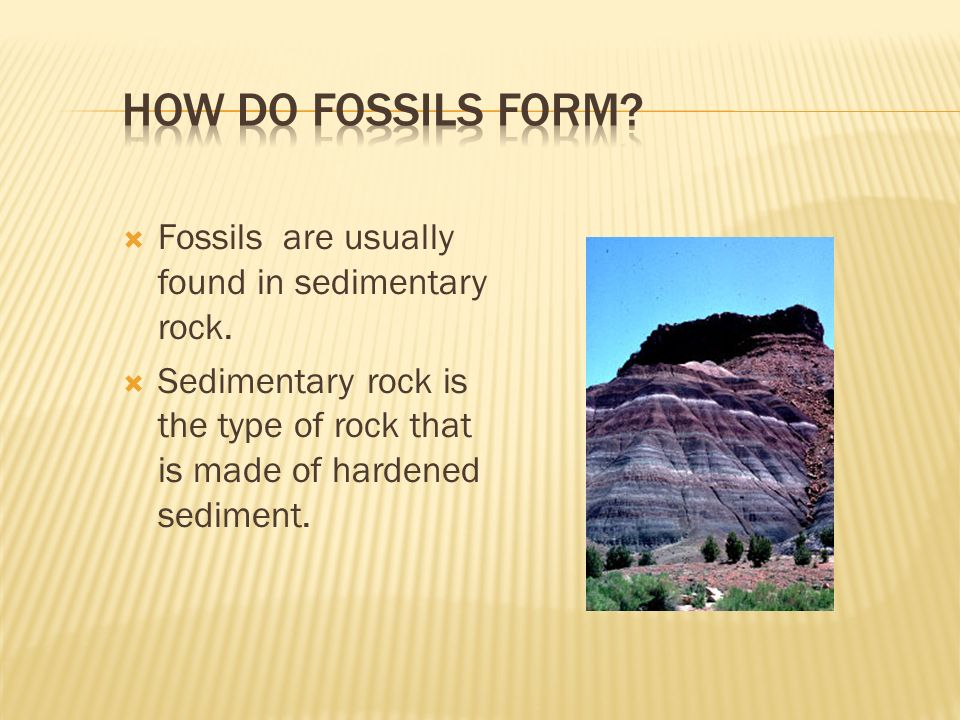 Essential Questions: What are fossils and how are they formed ...