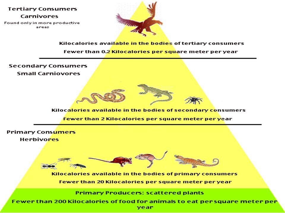 Ecological pyramid- shows how energy flows through an ecosystem.