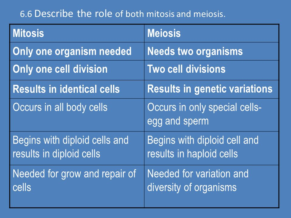 6.4 Describe the role of mitosis in cell repair. 6.5 Describe the role of mitosis in growth.