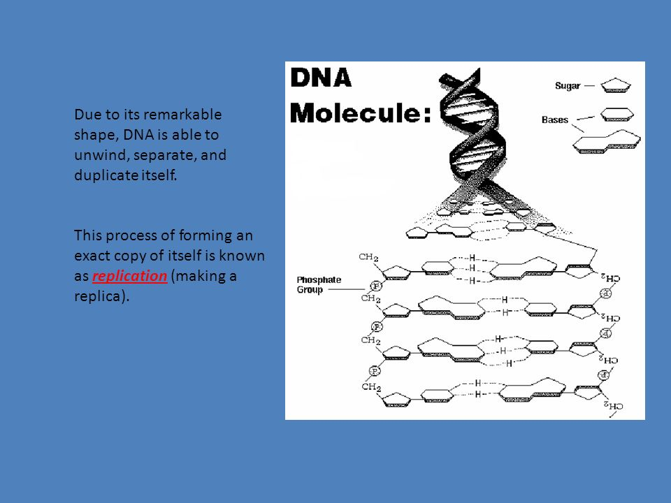 DNA is a nucleic acid; therefore, it is composed of many smaller units called.