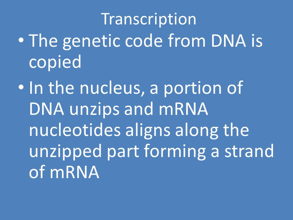 Protein Synthesis The process that forms the proteins that make up the structures of the cell The process that forms the proteins that make up the structures of the cell Two parts of protein synthesis Two parts of protein synthesis Transcription Transcription Translation Translation
