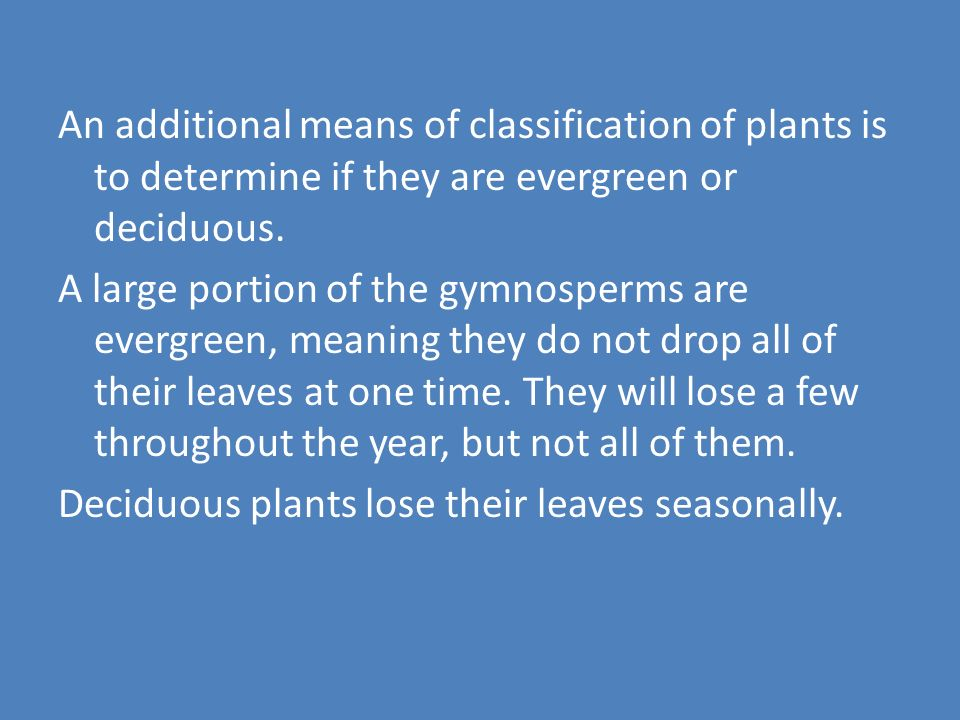 Vascular Plants With Seeds Gymnosperms (Gymnos means naked, sperma is a seed) Naked seed plants.