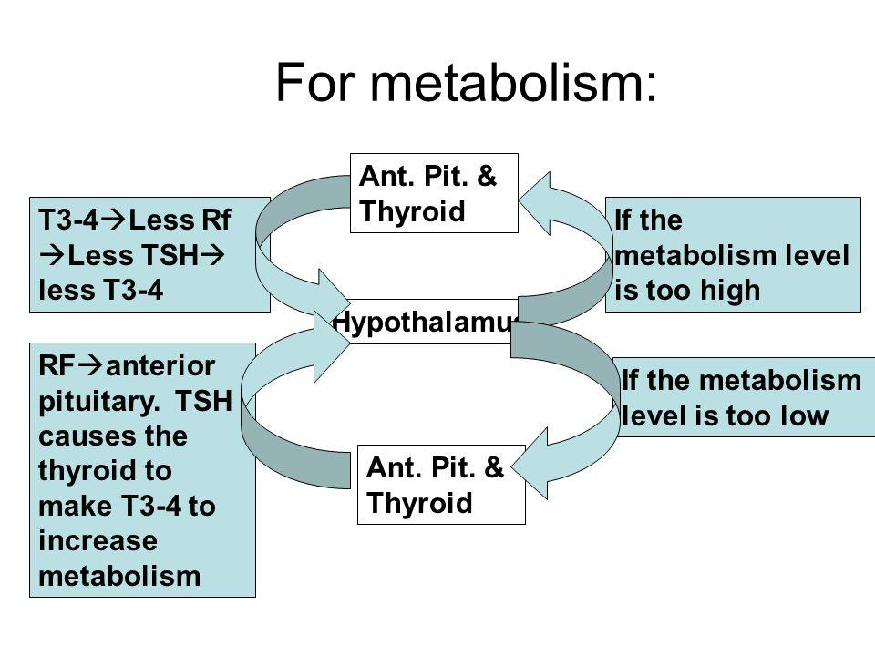 Metabolism t3