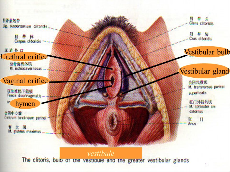 Chapter 1 The Anatomy Of The Female Reproductive System Section 1