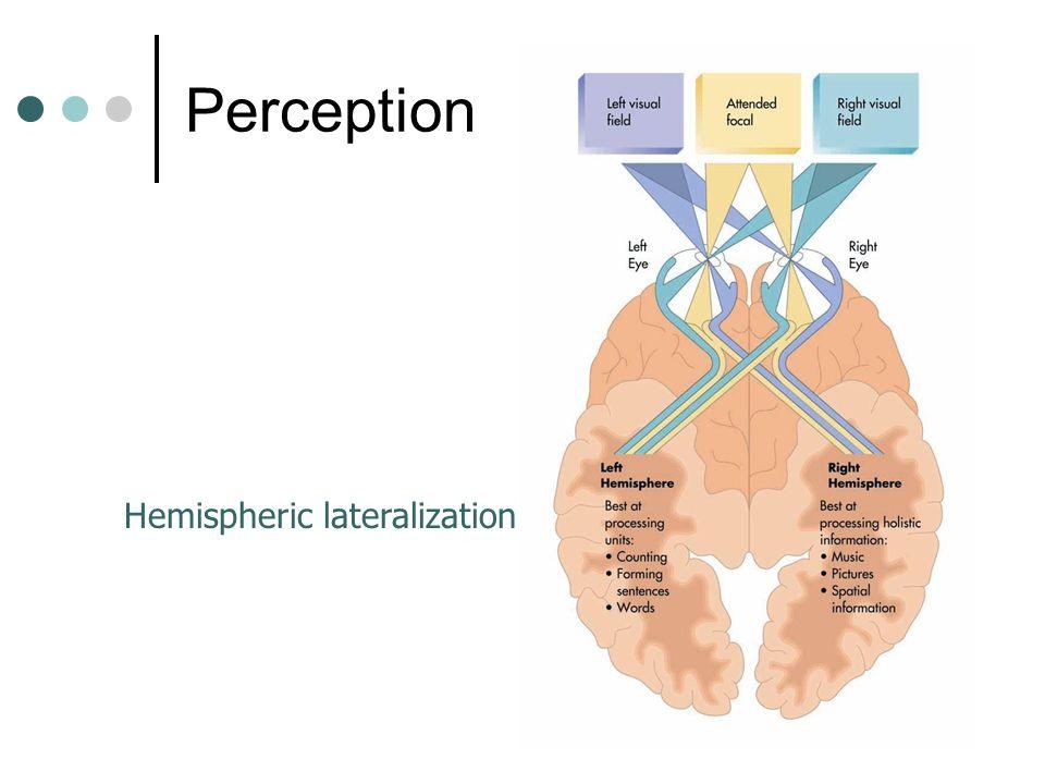 60 Hemispheric lateralization Perception