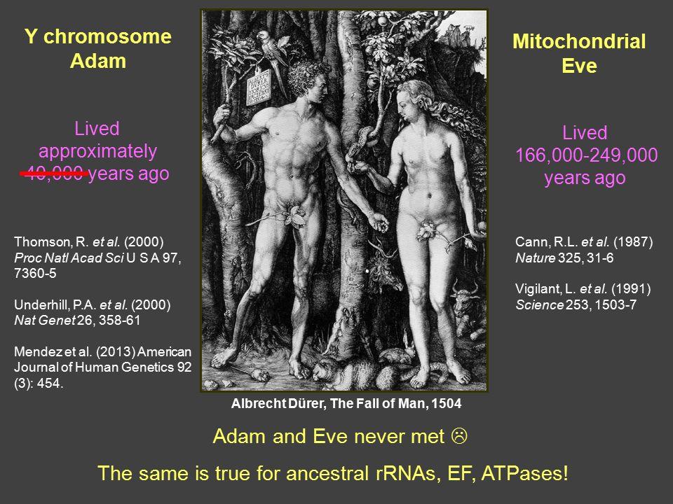Ychromosomal Adam  Wikipedia