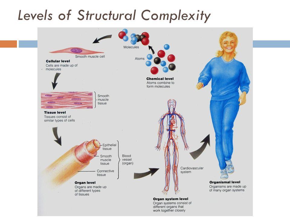 Tissue anatomy definition