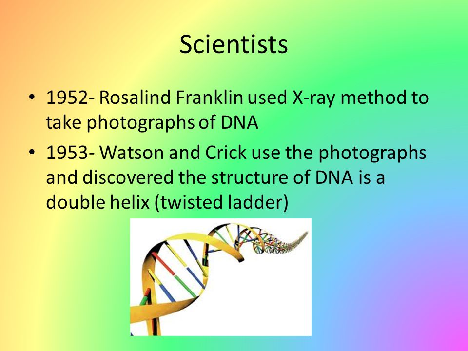 Scientists 1952- Rosalind Franklin used X-ray method to take photographs of DNA 1953- Watson and Crick use the photographs and discovered the structure of DNA is a double helix (twisted ladder)