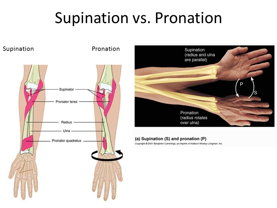 Old Fashioned Pronate Vs Supinate Composition - Anatomy And ...