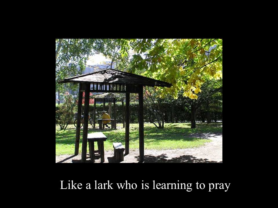 Like a lark who is learning to pray