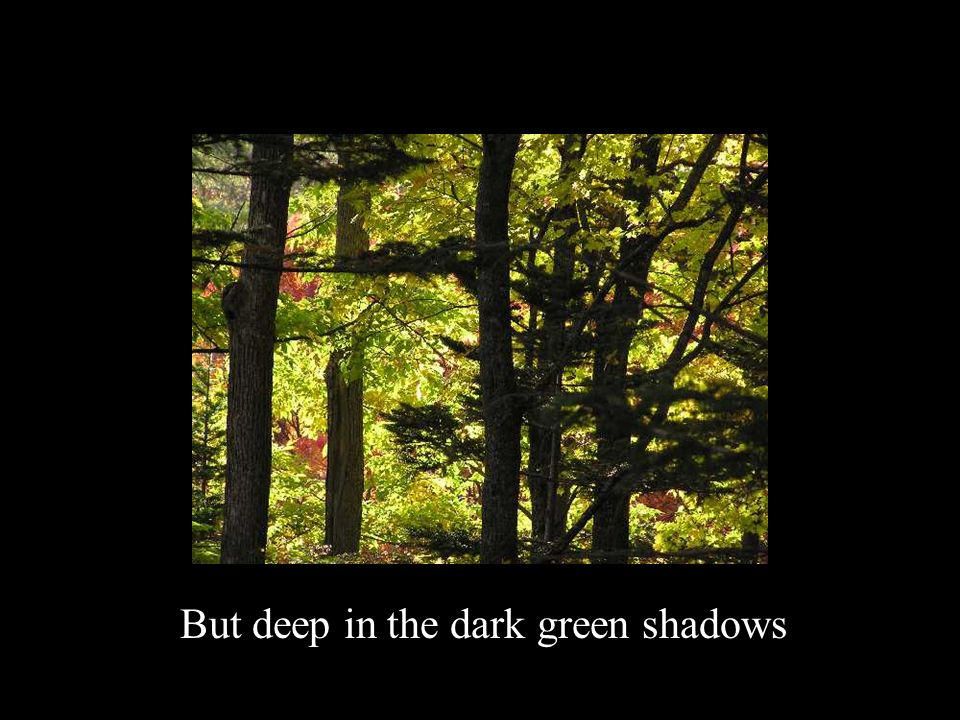 But deep in the dark green shadows