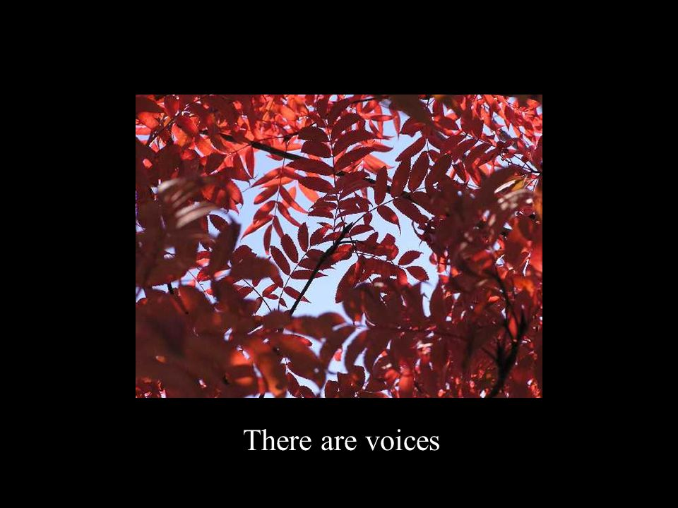 There are voices