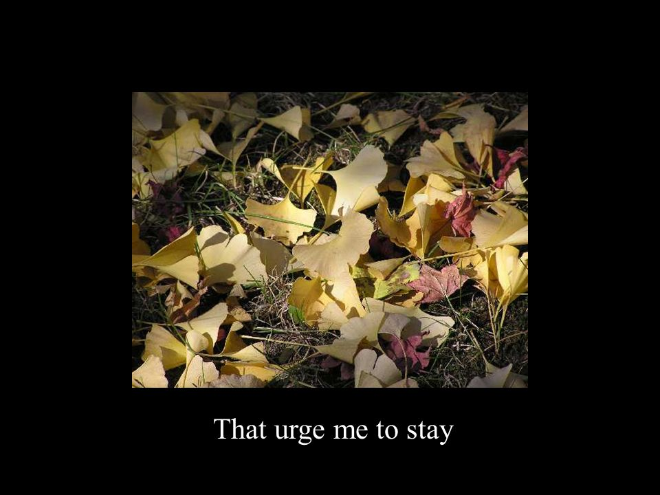 That urge me to stay