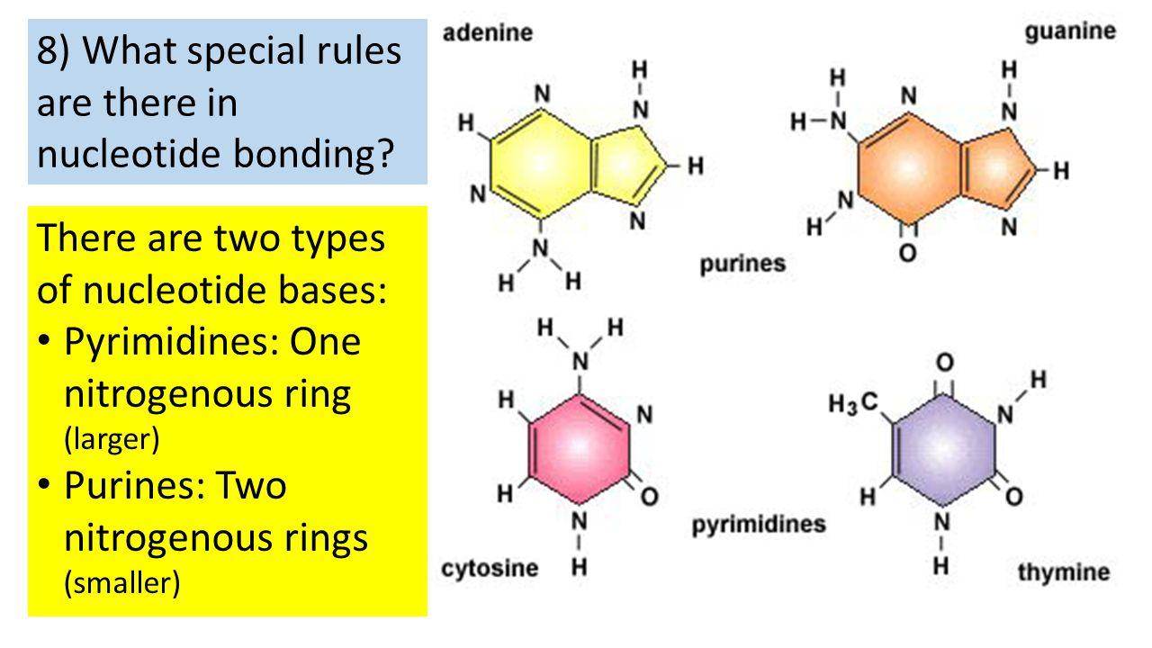 the biological description of the nucleotides