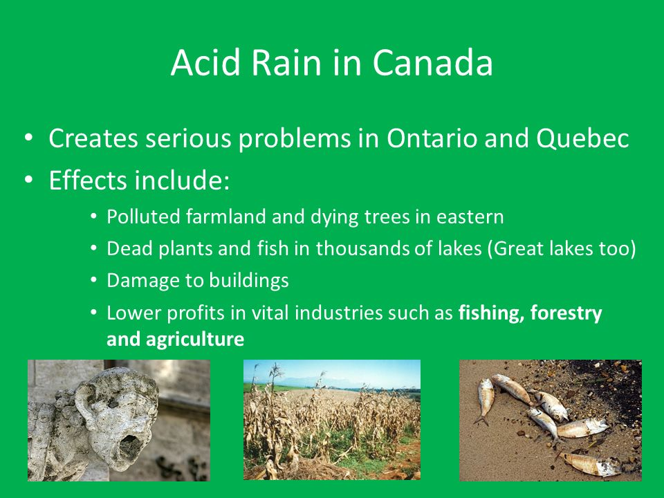 acid rain in ontario causes effects and prevention Causes, effects and solutions of acid rain: acid rain refers to a mixture of deposited material, both wet and dry, coming from the atmosphere containing more than normal amounts of nitric and sulfuric acids.