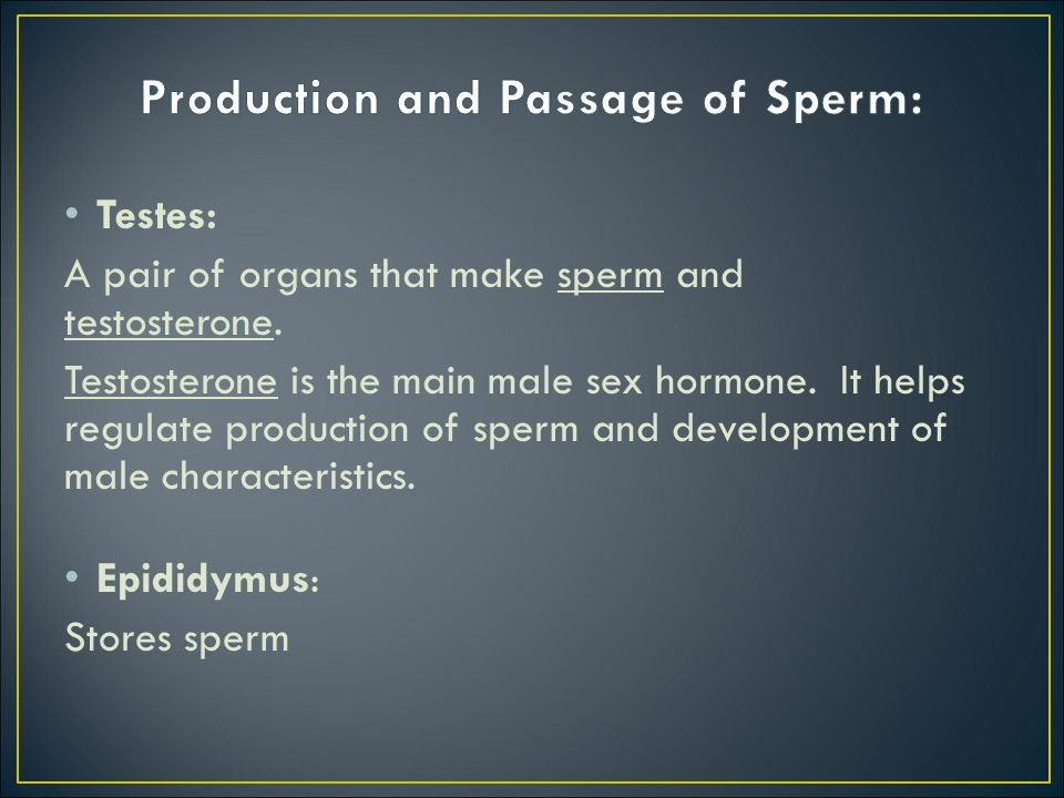 Testes: A pair of organs that make sperm and testosterone. Testosterone is the main male sex hormone. It helps regulate production of sperm and develo