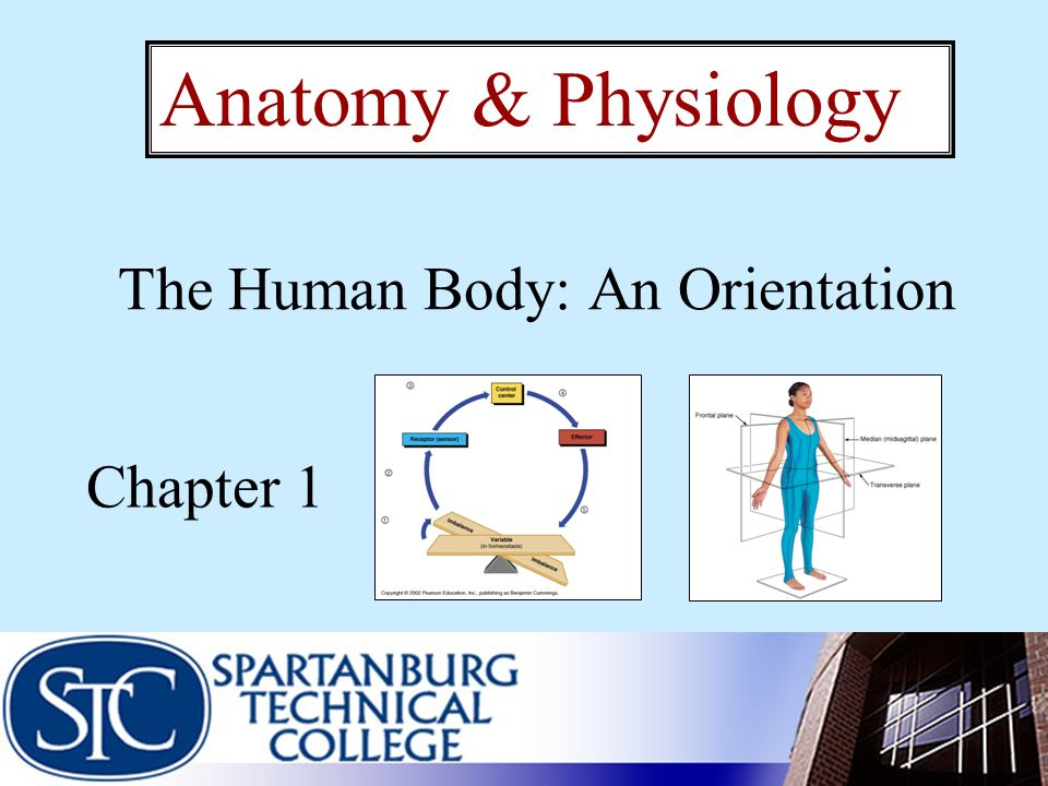 The Human Body: An Orientation Chapter 1 Anatomy & Physiology. - ppt ...
