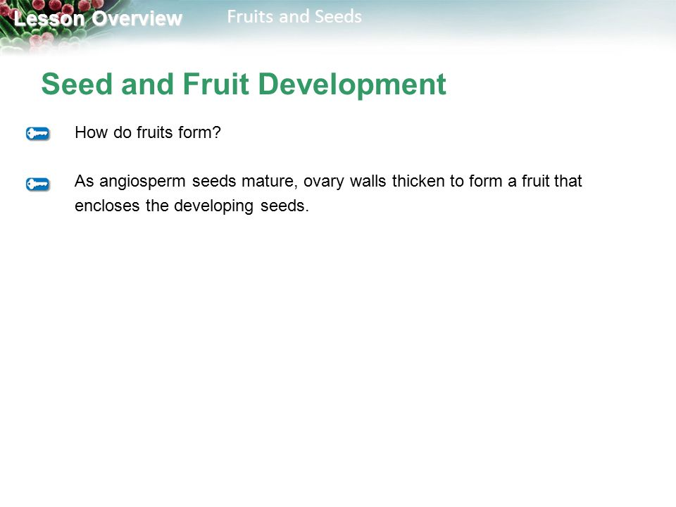 Lesson Overview 24.2 Fruits and Seeds Fruits and Seeds Lesson ...