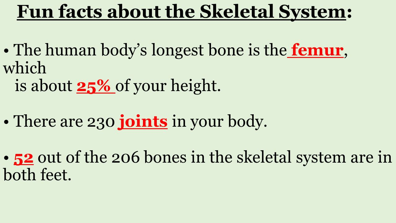 human body systems structure and function. **the student is, Muscles
