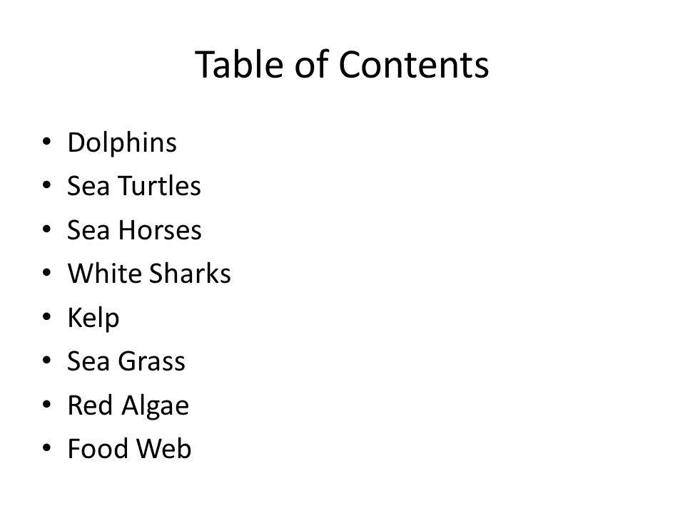 Table of Contents Dolphins Sea Turtles Sea Horses White Sharks Kelp Sea Grass Red Algae Food Web