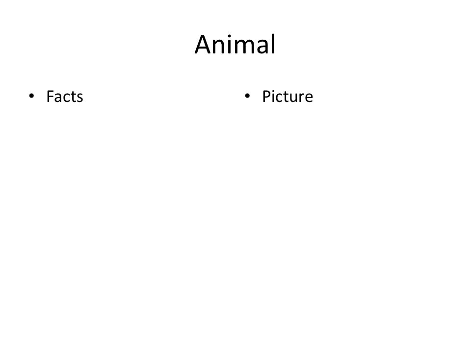 Animal Facts Picture