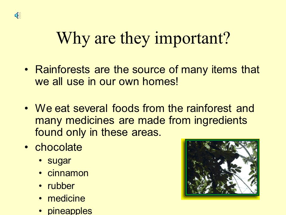 why are rainforests so important 21 reasons why forests are important don't miss the forest for the trees here are a few reminders why woodlands are wonderful.
