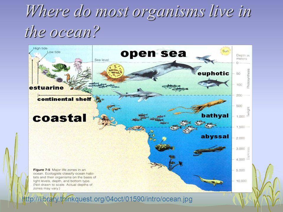 Oceans Zones Ecosystems And Resources Oceans Zones - 5 different oceans