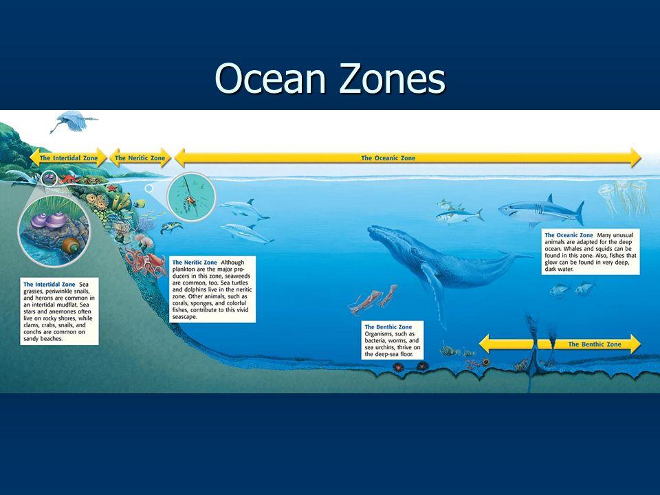 Ocean Zones Intertidal Zone: Intertidal Zone: