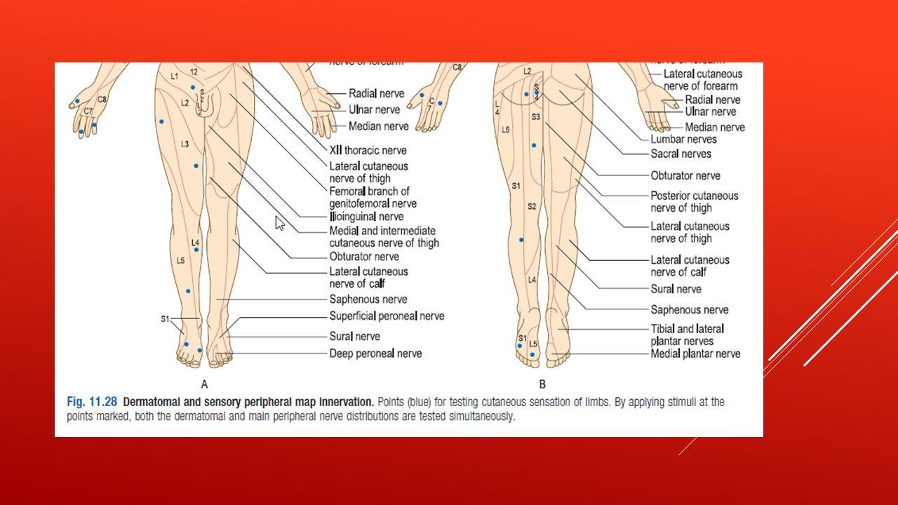 motor examination of the lower limb essay