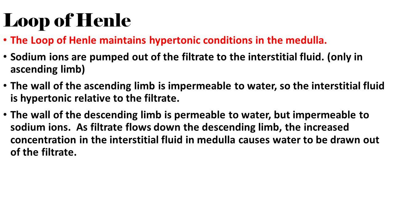Freshwater fish hypertonic - Loop Of Henle The Loop Of Henle Maintains Hypertonic Conditions In The Medulla
