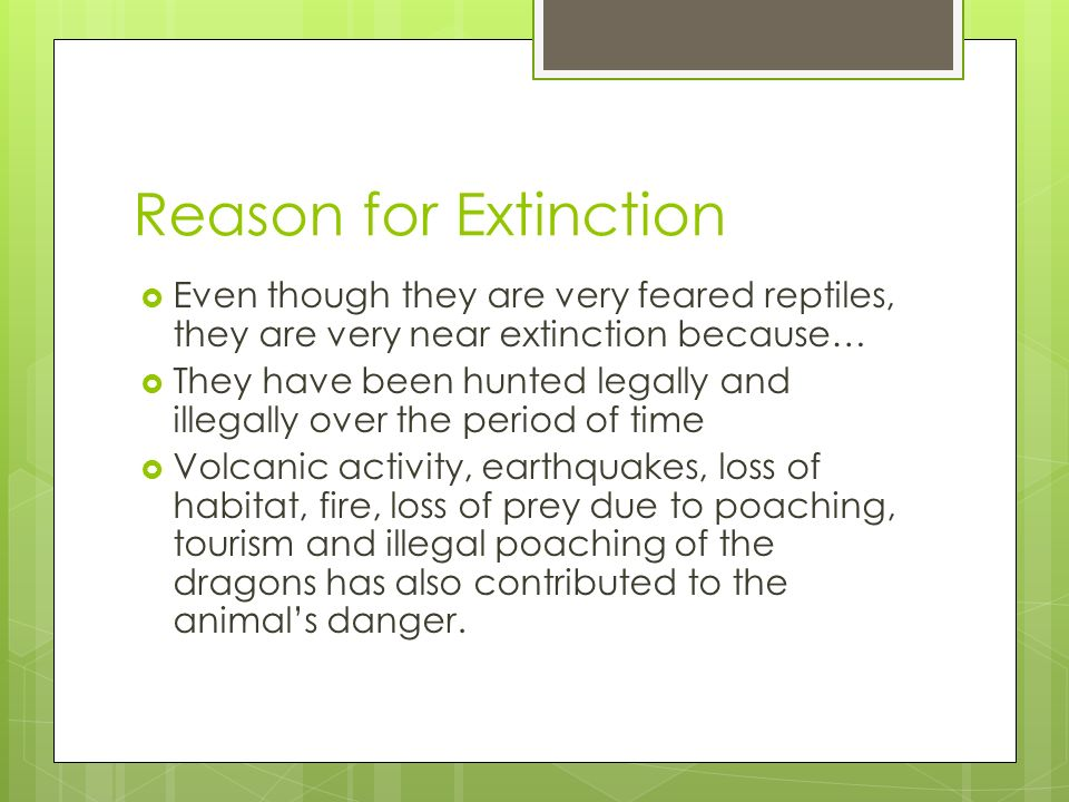Reason for Extinction  Even though they are very feared reptiles, they are very near extinction because…  They have been hunted legally and illegally over the period of time  Volcanic activity, earthquakes, loss of habitat, fire, loss of prey due to poaching, tourism and illegal poaching of the dragons has also contributed to the animal's danger.