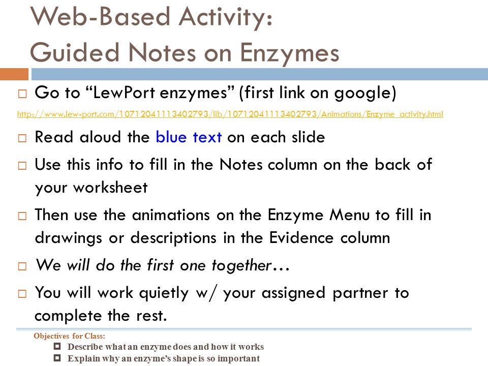 WebBased Activity Guided Notes on Enzymes Go to LewPort – Enzyme Activity Worksheet