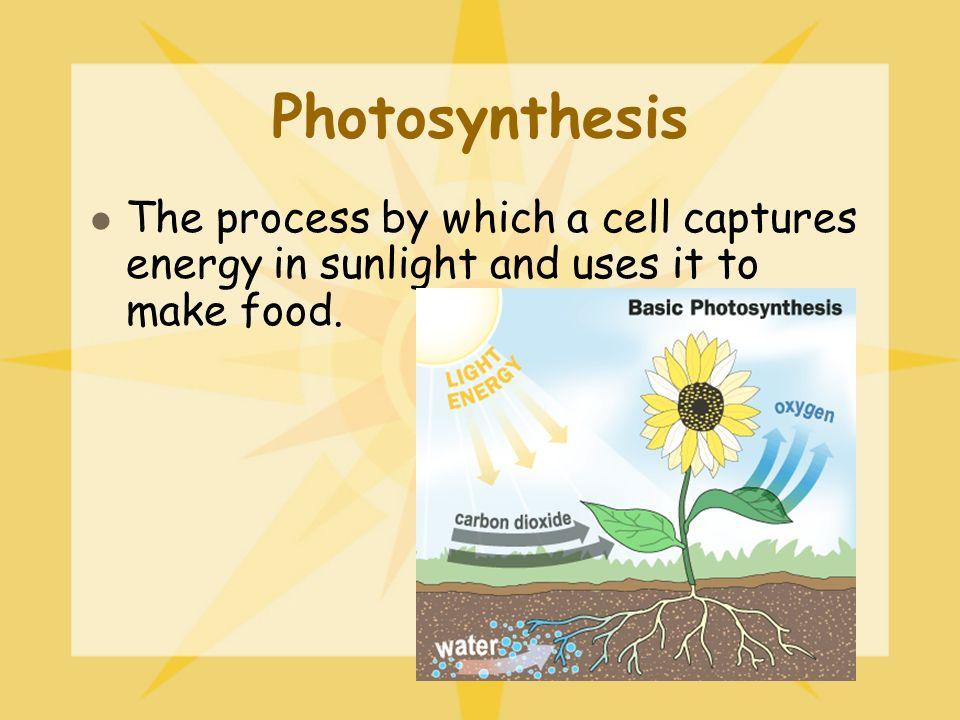 Cellular Processes Week 1: Photosynthesis vs. Cellular Respiration ...