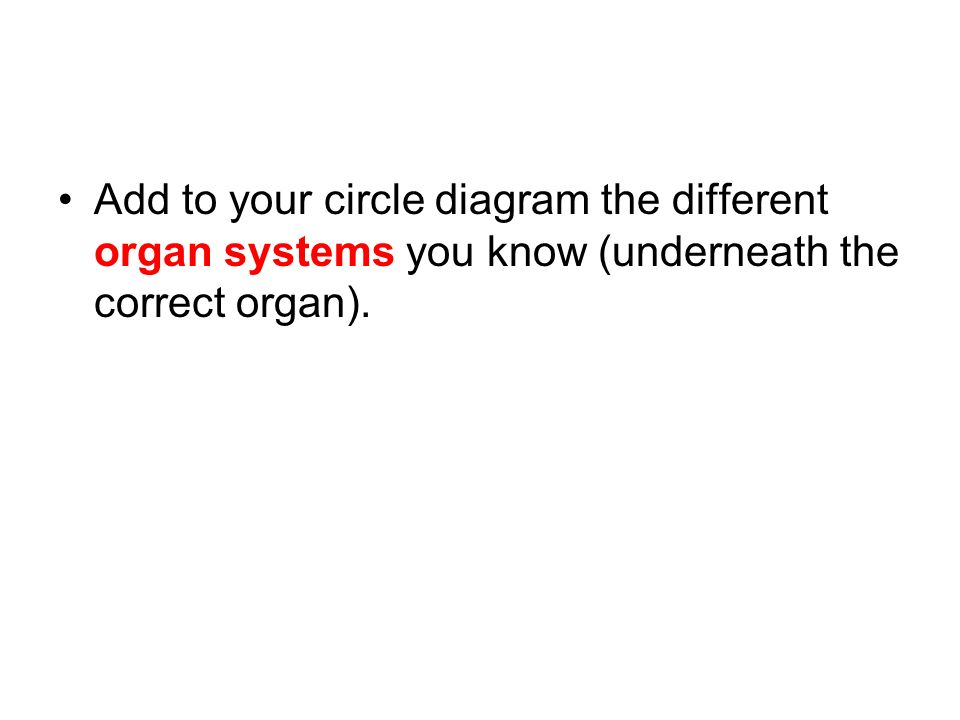 Cells tissues organs and organ systems resourcesks3 7 add to your circle diagram the different organ systems you know underneath the correct organ ccuart Image collections