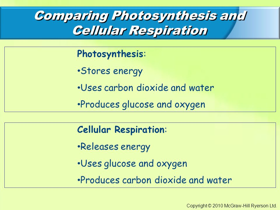 comparing photosynthesis and cellular respiration Chapter 9: cellular respiration and fermentation complete the table comparing photosynthesis and cellular respiration chapter 9: cellular respiration and.