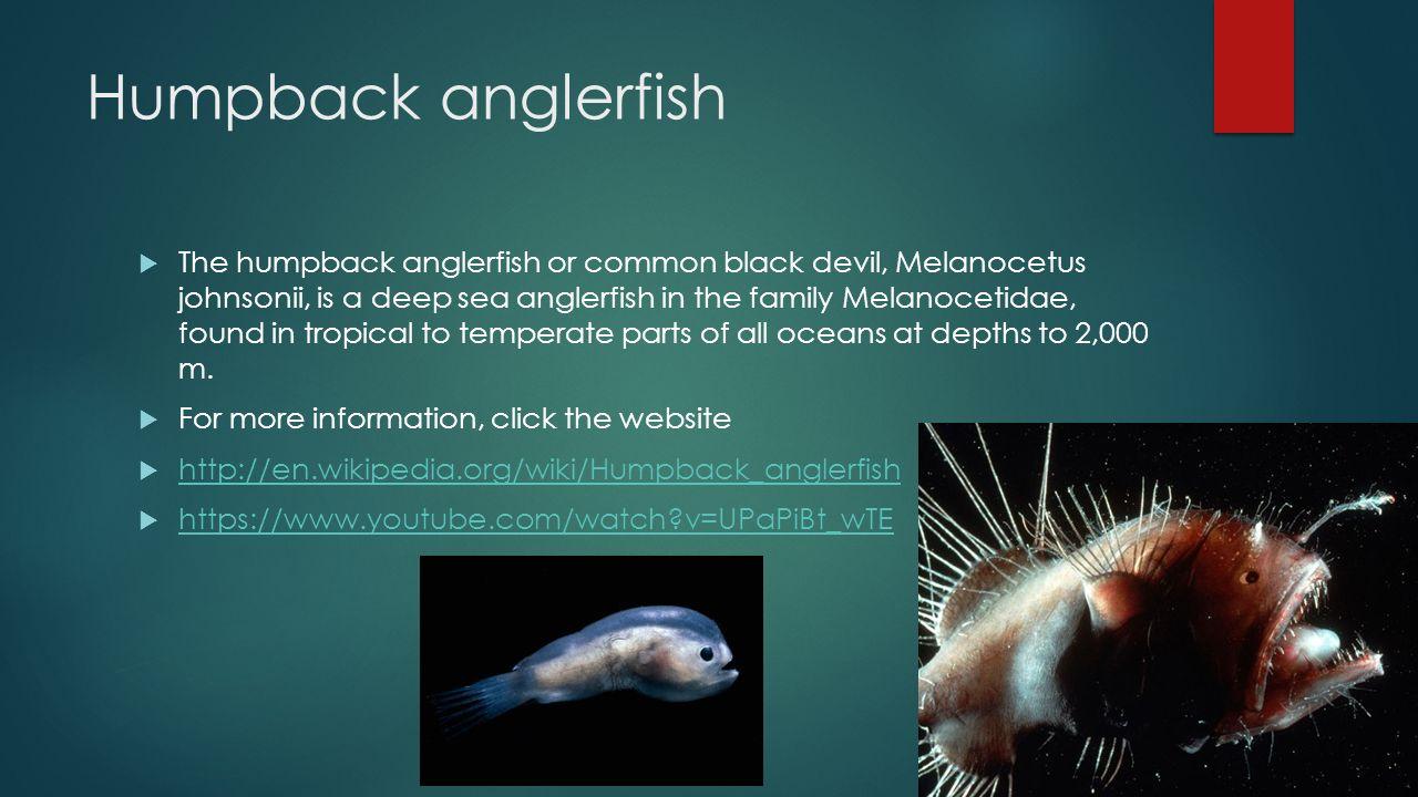 deep sea fish adaptions essay