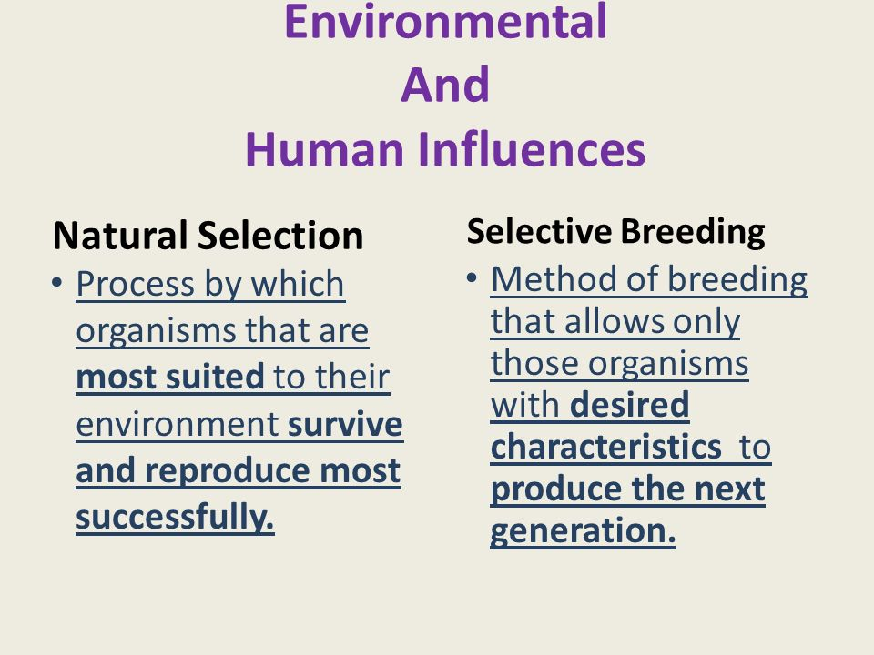 I have to write a science essay on selective breeding help?