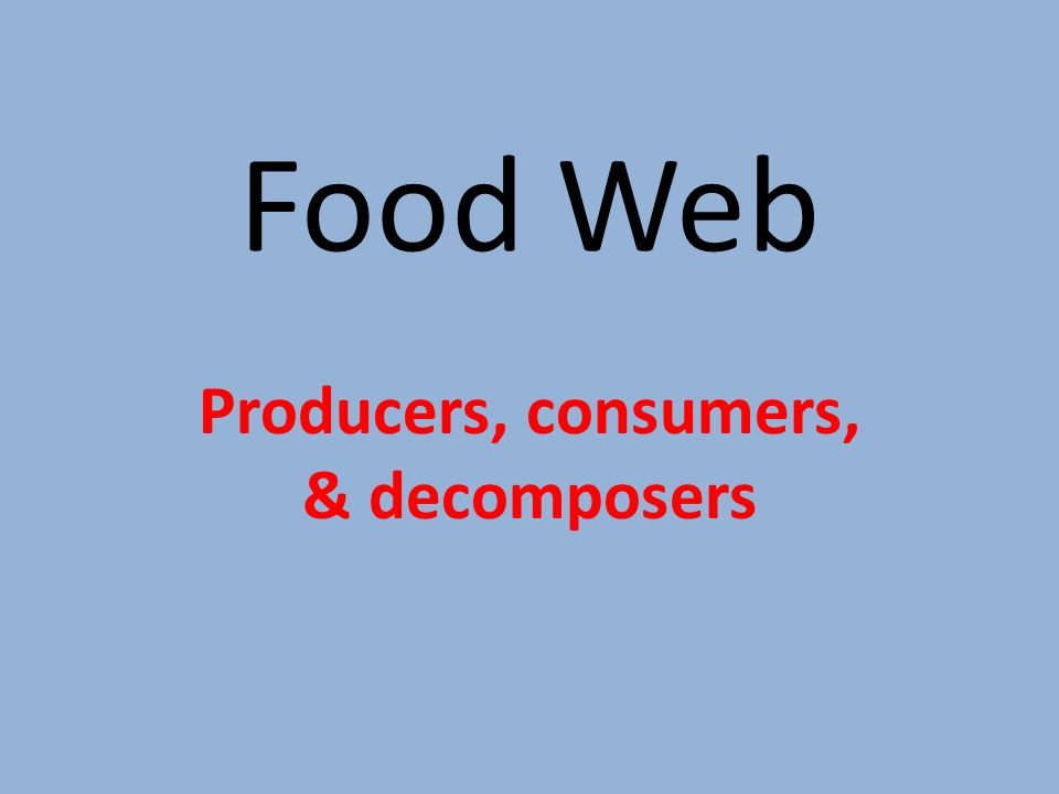 Food Web Producers, consumers, & decomposers