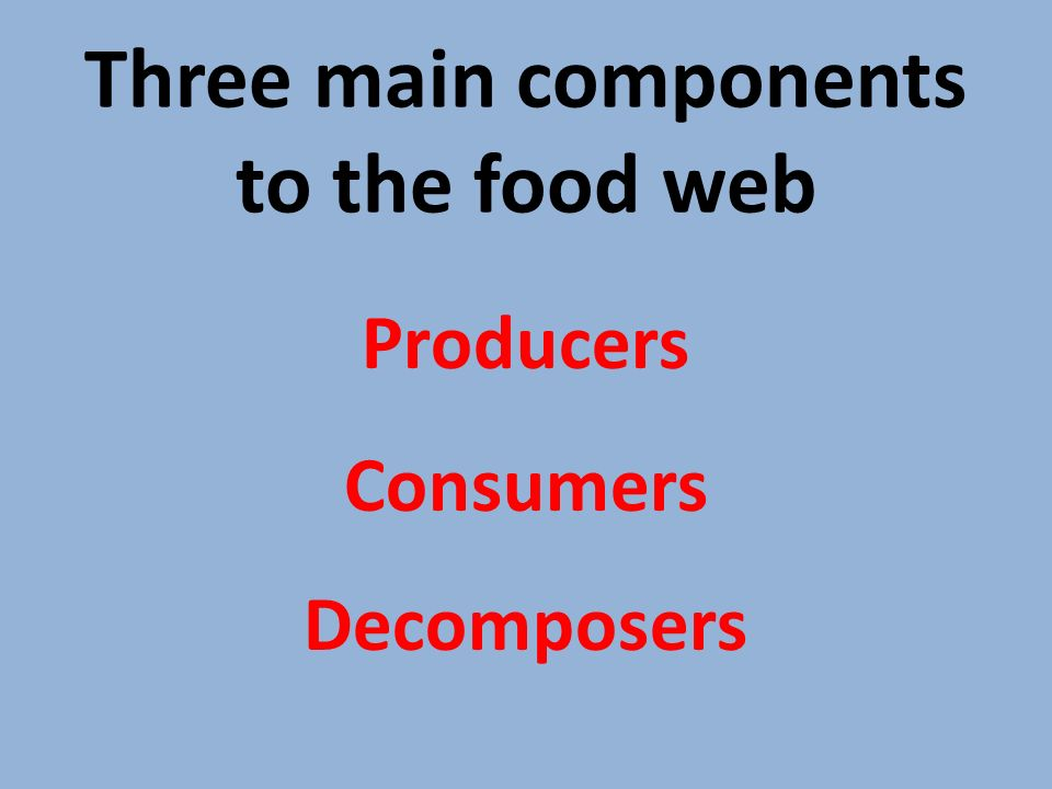 Three main components to the food web Producers Consumers Decomposers