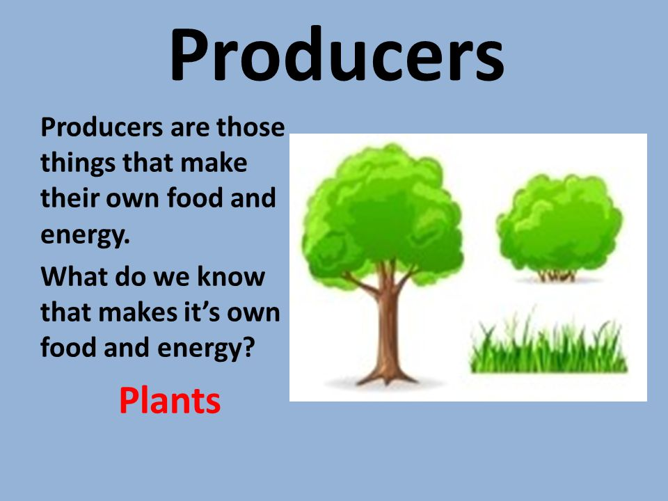 Producers Producers are those things that make their own food and energy.
